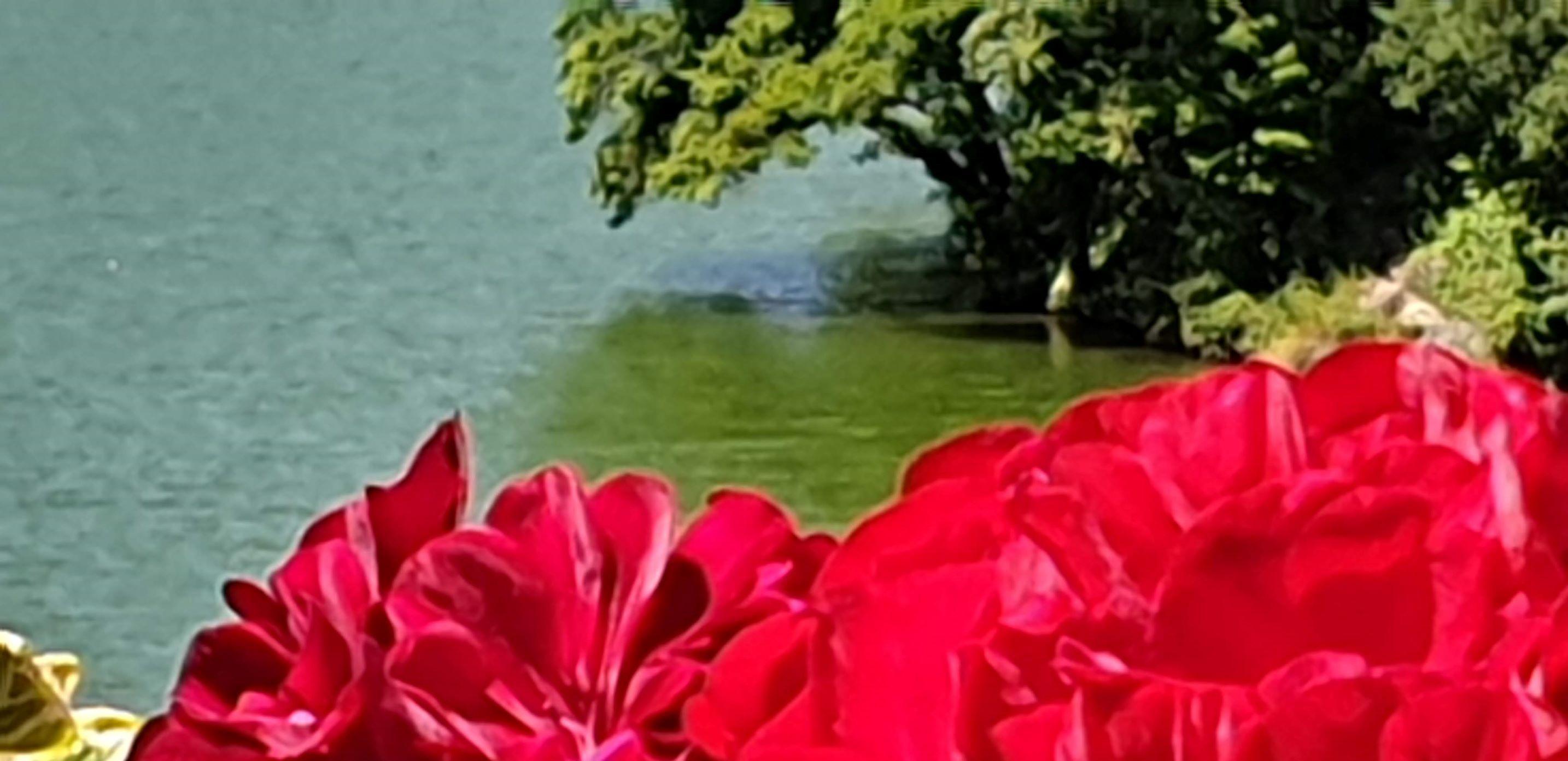 Ez nem egyszerű föld, hanem paradicsomi kert…és ha szíved van, akkor ezt érezned kell…